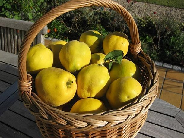 Kış meyvesi ayvanın 10 faydası