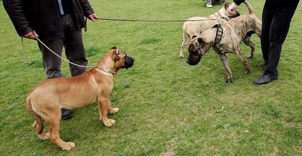 Tehlikeli köpek besleyene 16 bin lira ceza
