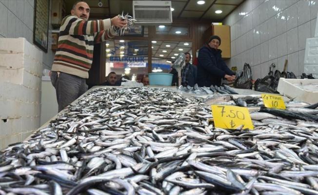 Karadenizli balıkçılar hamsi konusunda umutsuz