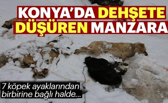 Konya'da 7 köpek ayakları bağlı halde ölü bulundu