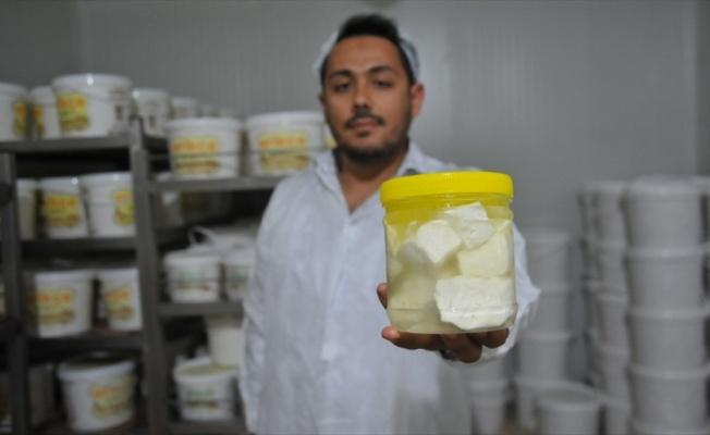 'Antep peyniri' sınırları aşıyor