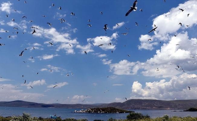 Çıldır Gölü, uçmayı öğrenen yavru kuşlarla şenlendi
